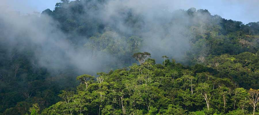 Que faire dans les terres sauvages Thaïlande